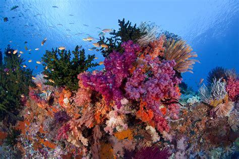 Raja Ampat Islands   Rough Guides