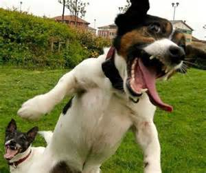 hyperactive dogs tips for a hyperactive dogs my home i dogs
