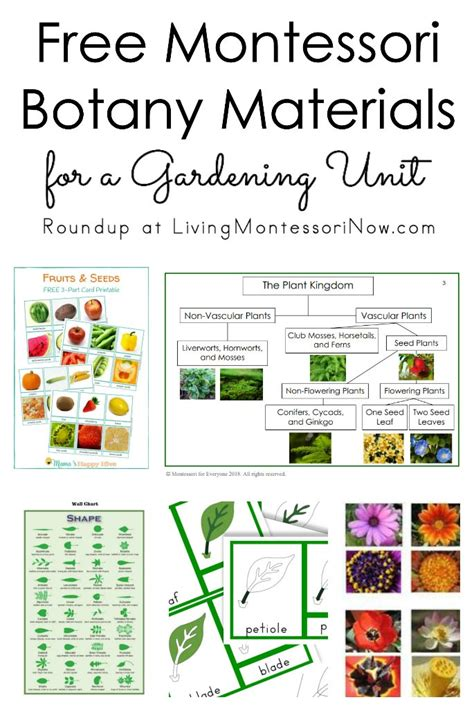 free montessori materials online free montessori botany materials for a gardening unit