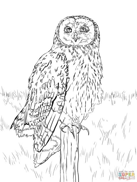 realistic owl coloring page short eared owl coloring page free printable coloring pages