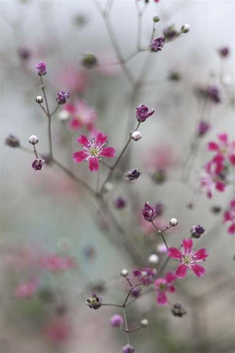 bloemen bestellen deventer 25 beste idee 235 n over bloemen foto s op pinterest bloem