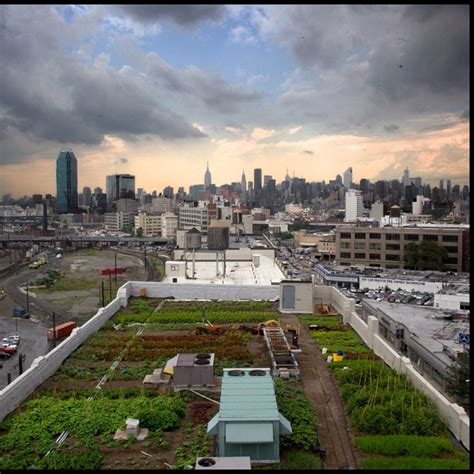 new york roof garden up on the roof and walls pinterest