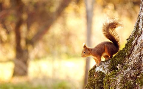 pin  hot spicy  hd wallpapers   wild animal