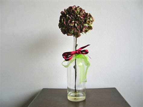 ortensie in vaso piantare ortensie in vaso idee per il design della casa