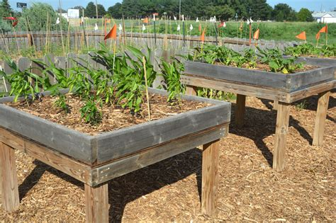 vegetable beds mary mary or ron how does your garden grow