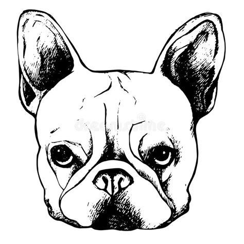 imagenes vector bulldog perrito lindo del dibujo del vector del perro del dogo del