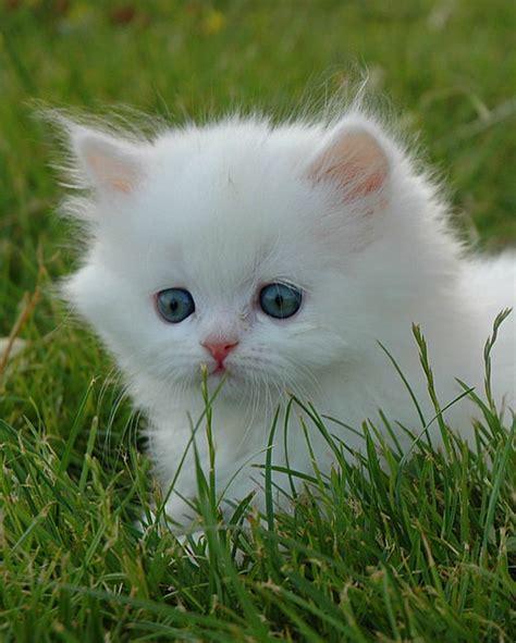 en tatli kedi resimleri orjinal soezler en guezel soezler