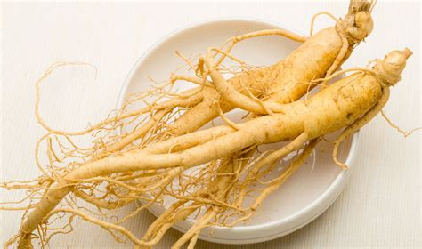 Panax Ginseng panax ginseng testosterone studies and evidence