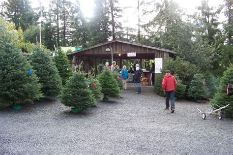 larsen s christmas tree farm attractions in petaluma