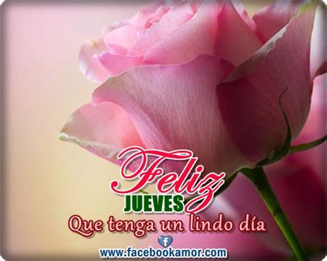 imagenes animales jueves 96 best images about evelin romero on pinterest animales