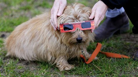 dogs and solar eclipse 8 brilliant myths which come with a solar eclipse bt