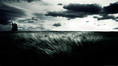 hd wallpaper black nature 37 black and white backgrounds pictures wallpaper