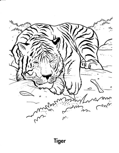 coloring page bengal tiger free printable tiger coloring pages for kids