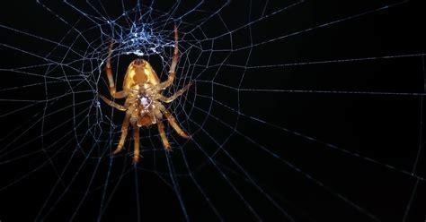 wie viele spinnen isst ein mensch im schlaf aufgedeckt 7 mythen 252 ber spinnen was stimmt was nicht