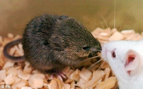 Animals can tell right from wrong scientists suggest it s not just