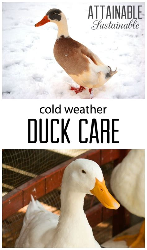 17 best ideas about duck 17 best ideas about duck coop on pinterest duck pond
