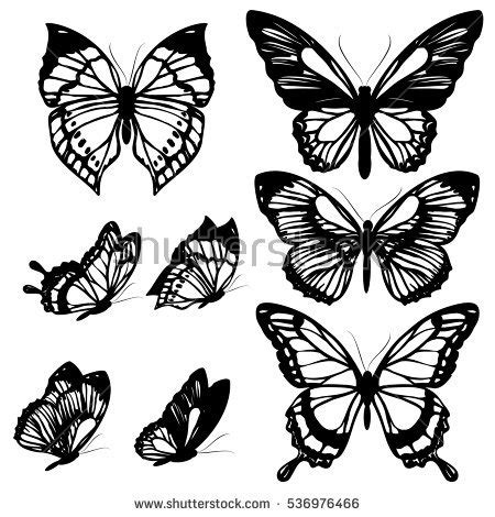 butterfly stock images royalty free images amp vectors