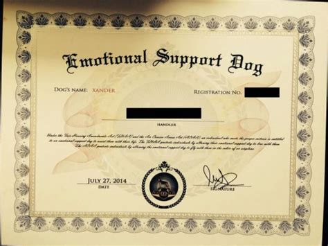emotional support certificate emotional support vbn