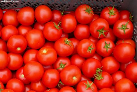 The Tomato by Health Benefits Of Tomato Healthyrise