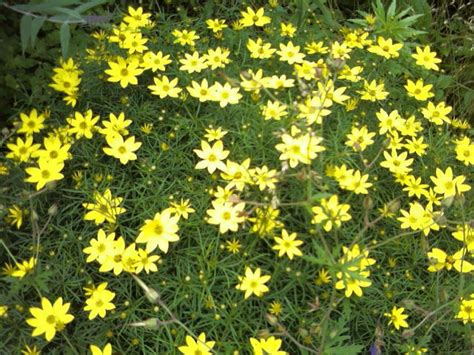 low maintenance flowering shrubs 10 best images about top 10 favorite low maintenance