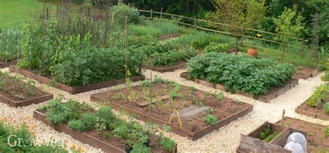 How to Plan a Vegetable Garden: A Step by Step Guide