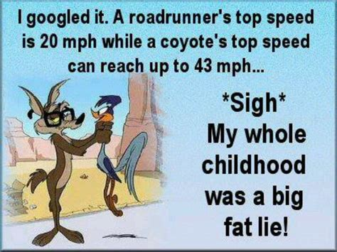 funny coyote road runner roadrunner and wiley coyote wile e coyote and acme