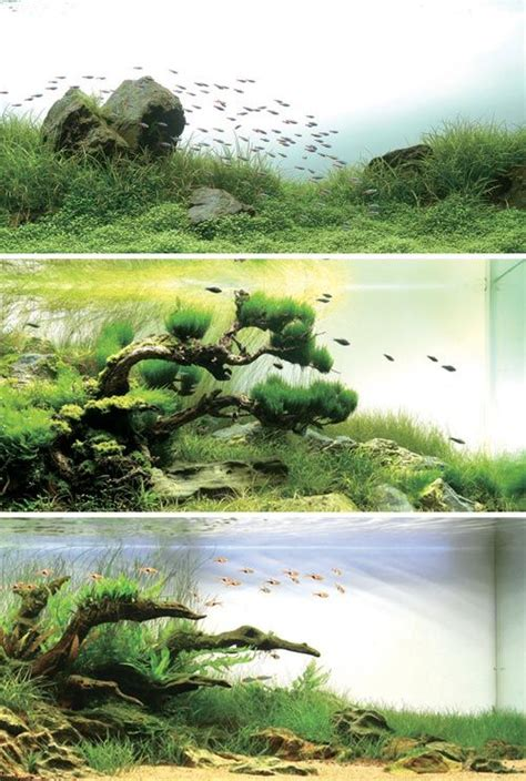 aquascape inspiration 67 best images about aquascaping inspiration on pinterest
