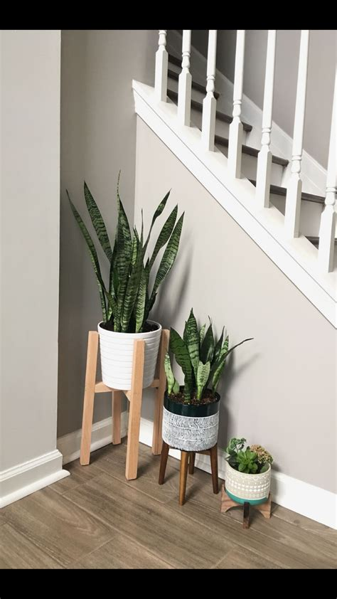 air purifying plants snake plants indoorplants