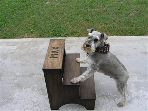 small step stool  yorkie    bed  lstubby