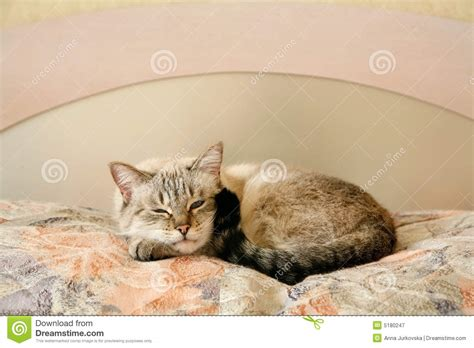cat bedroom lazy cat in the bedroom royalty free stock photography