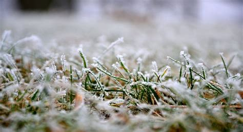 winter lawn care winter lawn care what you should know
