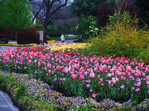 dallas arboretum and botanical garden flowers