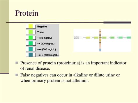 1 protein in urine while ppt examination of urine powerpoint presentation id 497429