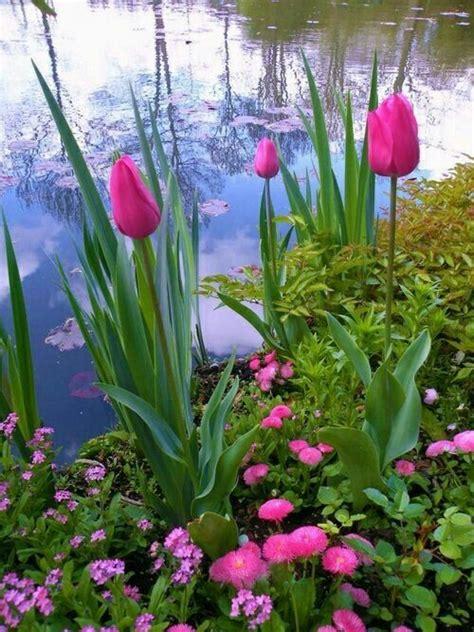 monet flower  garden art flowers