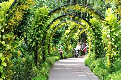 Garden Arch Singapore See The World S Display Of Orchids At The National