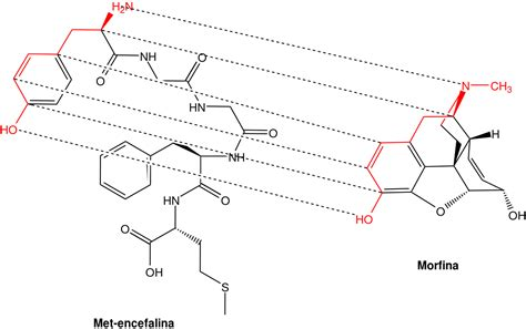 Opioid Also Search For Opioid Peptide