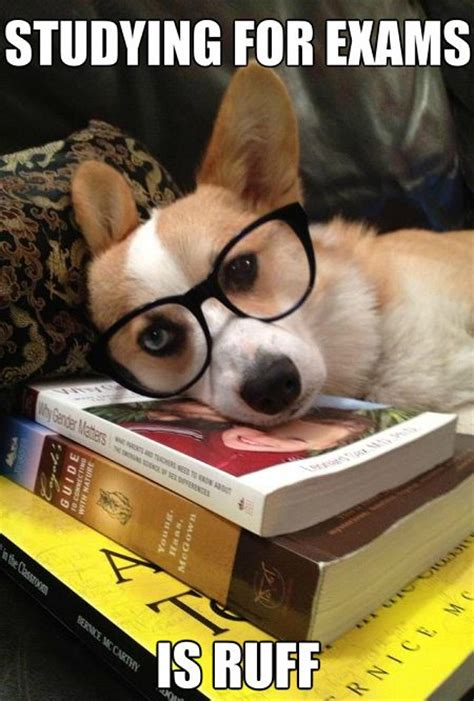 Funny Study Memes - ruff studying meme slapcaption com animals with books