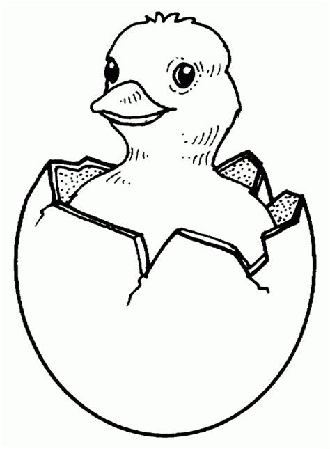 coloring page baby chick free coloring pages of baby chick outline