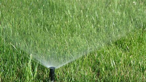 Pilzbefall Im Rasen 3675 by Pilzbefall Im Rasen Pilzbefall Im Rasen Hilfe Rosa