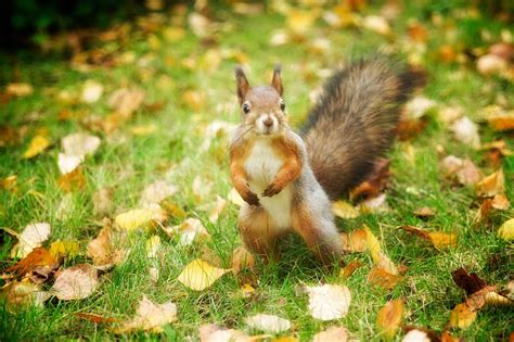 squirrel buries nut in 27 wonderful animal facts that will put a smile on your viralscape