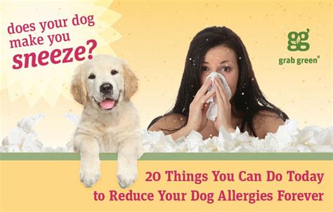 shih tzu runny nose 25 best ideas about pet allergies on skin allergies stuff and