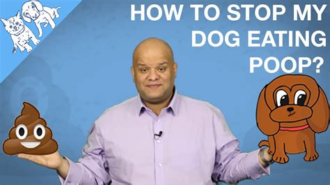 how to get dog to stop pooping in the house how to stop my dog eating cats poop or his youtube