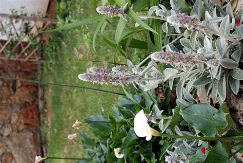 Blumen Und Pflanzen by Blumen Und Pflanzen Istrien Kroatien Photos Und
