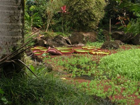 Waimea Arboretum And Botanical Garden Best Places To Visit In Hawaii Hawaii Top 15 Attractions