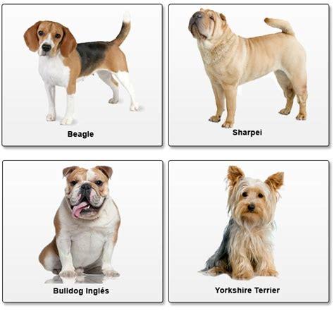perros todas clases raza de perro