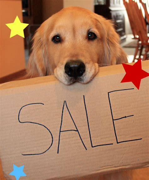 dogs on sale xvon image on sale