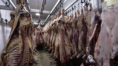 butcher house slaughter butcher house hanging beef in freezer stock video footage videoblocks