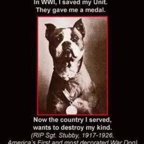 Sgt Stubby Pitbull Save The Pitbull Breed Quotes Quotesgram