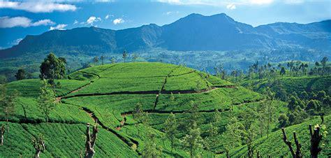 Ceylon Srilanka tea estates in sri lanka