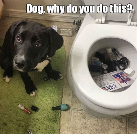 bad dog meme funny pictures quotes memes jokes